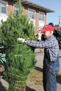 Messenger photos by Stephanie Nesler Dwain Waters of Waters' Christmas Tree Farm in South Solon inspects a tree before it is boxed and loaded to be sent to military servicemen and women stationed overseas. The Madison County resident has donated trees and volunteered his time to Operation Evergreen for many years.