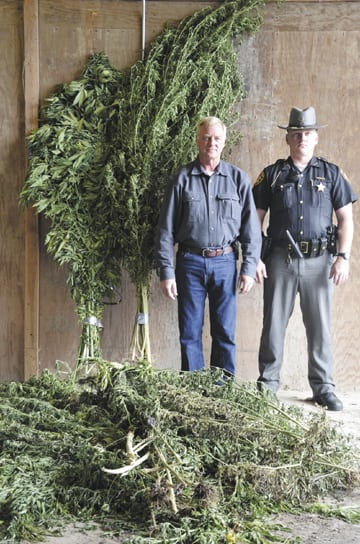 Messenger photo by Kristy Zurbrick Madison County Sheriff Jim Sabin (left) and Deputy Aric Shorr stand alongside marijuana plants found in the county's most recent eradication flyover.