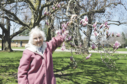 Messenger photos by Kristy Zurbrick Martha Mabe enjoys the blooms on a magnolia tree her sister planted over 40 years ago. The Madison County Master Gardeners selected the tree as this year's Heritage Tree.