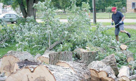 cramer and tree