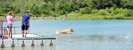 Boomer, a golden retriever, dives off the floating dock to retrieve a ball. Boomer is owned by Melinda Beebe of Dublin.